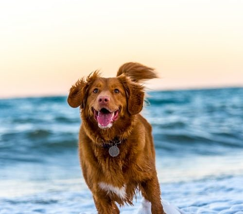 Awesome Gadgets and Accessories for Your Dog